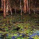 The swamp by Jeff Davies