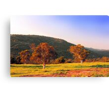 Swan Valley - Western Australia  Canvas Print