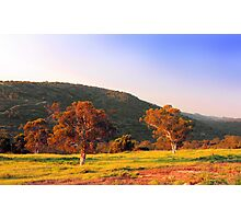Swan Valley - Western Australia  Photographic Print
