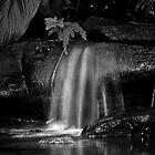 Flecker Gardens by Danielle Bloxsom
