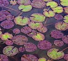 Waterlillies,  Balboa Park,  San Diego California by Colin Reed