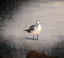 Lonely Bird by elainemarie999