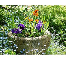 Spring bower Photographic Print