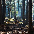 Wombeyan Creek by Stephen Norris