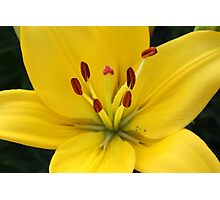 Bright Yellow Lily Photographic Print