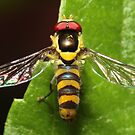 Hover Fly by Darren Post