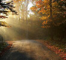 Misty Morning by Molly  Kinsey