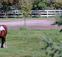 Brown & White Horse by Robin M. Monk