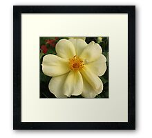 Soft Yellow Rose Framed Print