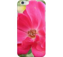 Knock Out Rose iPhone Case/Skin