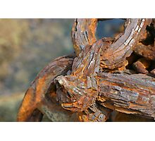 Rusty Thing Photographic Print