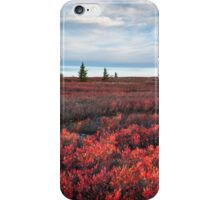 Dolly Sods Wilderness Area Autumn West Virginia iPhone Case/Skin