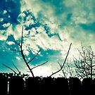 clouds trees and fence by Kiny McCarrick