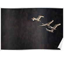 Swan Quartet Poster