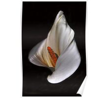 Flowers of Greece - Calla Poster