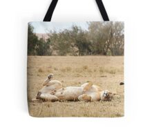 Domestic Bliss. Lions After Copulation, Maasai Mara, Kenya  Tote Bag