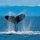 whale slapping by mbrookes81