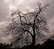 SCARY TREE  by sofficino74