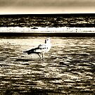 seagull by A.R. Williams