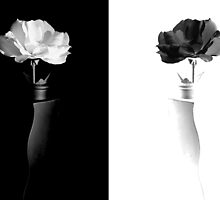 Black or White by Sherrianne Talon