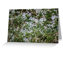 Hailstones in the Grass Greeting Card