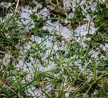 Hailstones in the Grass by Nicole Petegorsky