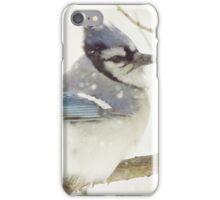 Snowy Blue Jay iPhone Case/Skin
