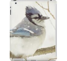Snowy Blue Jay iPad Case/Skin