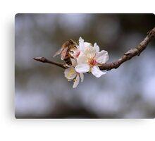 Sweet Cherry Bloosoms ~Honey Bee~ Canvas Print