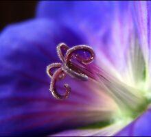 Lightness of being.... by Mary Trebilco