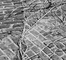 Brick and Ivy by Kerry Dunstone