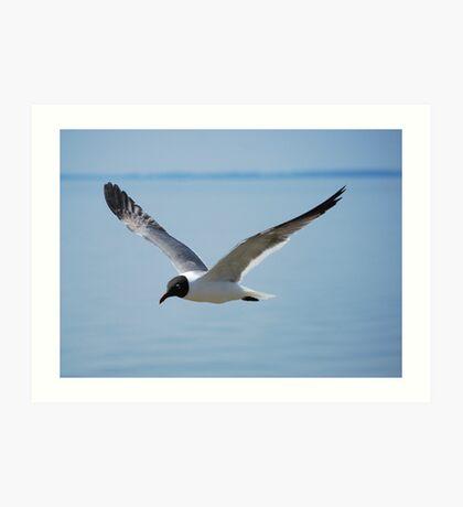 James River Gull Close-up Art Print