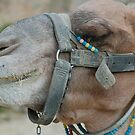 Camel by Marguerite Foxon