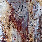 Gum Tree Bark by Marguerite Foxon
