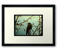 Tweet Tweet Framed Print