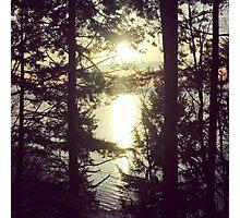 Northwest Forest Photographic Print