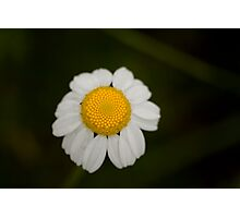 Innocence in a flower Photographic Print