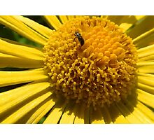 Insect struggle Photographic Print