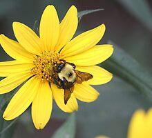 Bumblebee by beckclaye