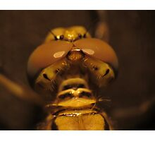 Back View Of A Dragon Fly's Head Photographic Print
