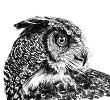 Great Horned Owl by atomicblizzard