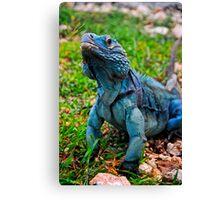 Grand Cayman Blue Iguana [ Cyclura lewisi ] Canvas Print