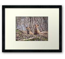 Kit Foxes 2011-1 Framed Print