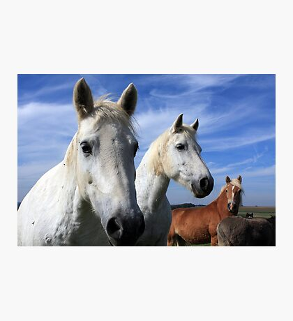 White Camargue Horses Photographic Print