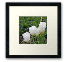 Four White Tulips Framed Print