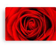 Scarlet Rose Canvas Print