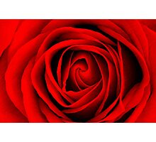 Scarlet Rose Photographic Print