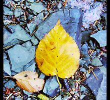 Yellow Leaf by fixtape