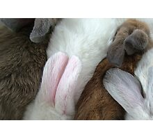 """Bunny Ears"" Photographic Print"