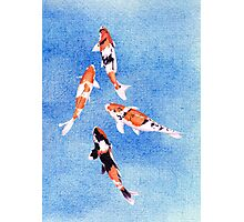 Floating Koi Blue Photographic Print